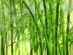 Растущий бамбук