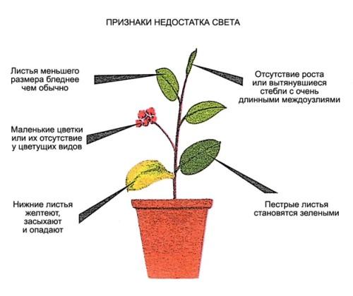 Нехватка света у растений
