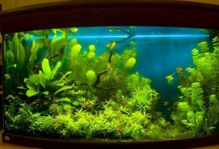 Пример освещения аквариума и их оформление