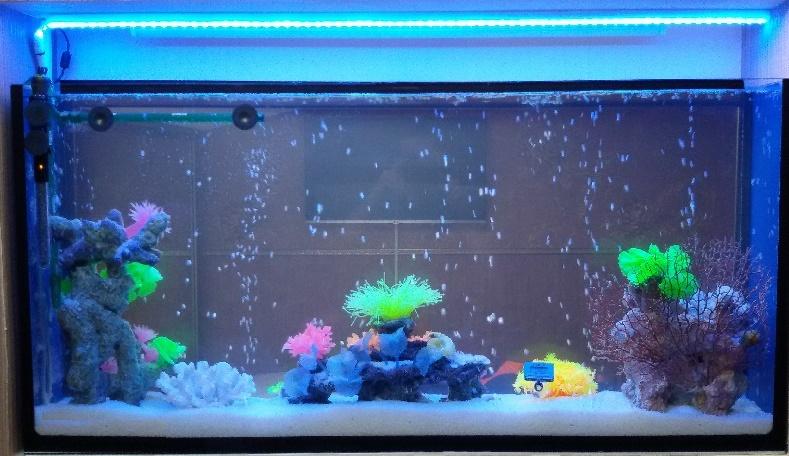 Освещение аквариума лампы экономки