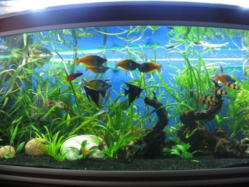 Подсветка декоративных элементов аквариума