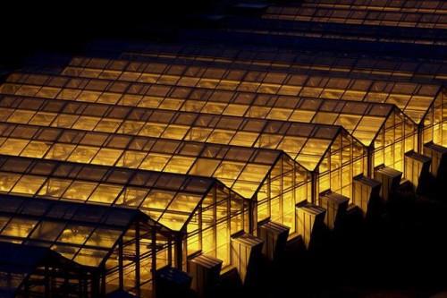 Теплицы освещенные днат лампами