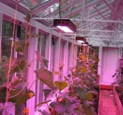 Установка индукционных ламп для домашних растений