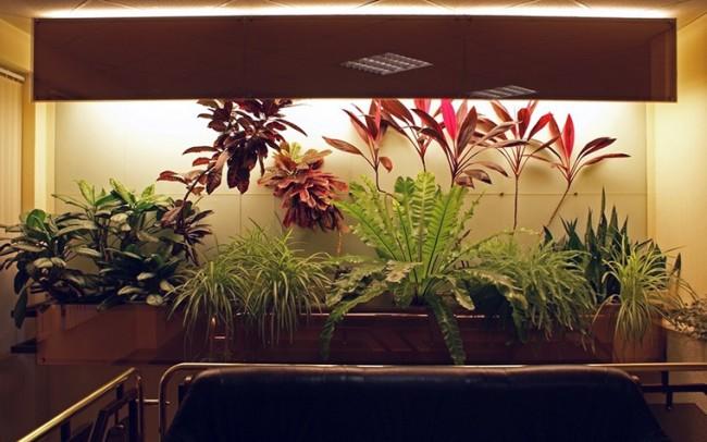 Вариант подсветки домашних растений