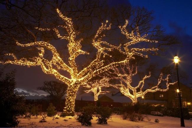 Дерево украшенное новогодней гирляндой