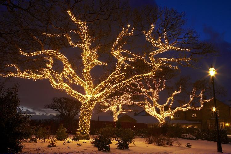 Традиционные деревья на новый год