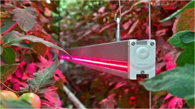 Внешний вид светильника для теплиц