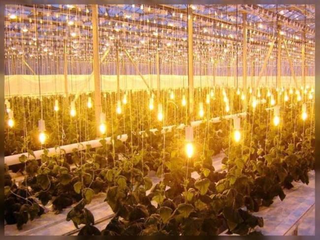 Освещение теплицы лампами ртутного типа