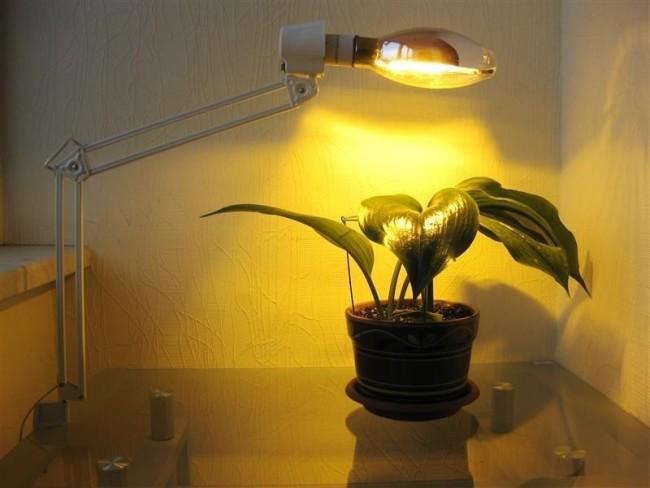 Пример ламп накаливания для освещения растений