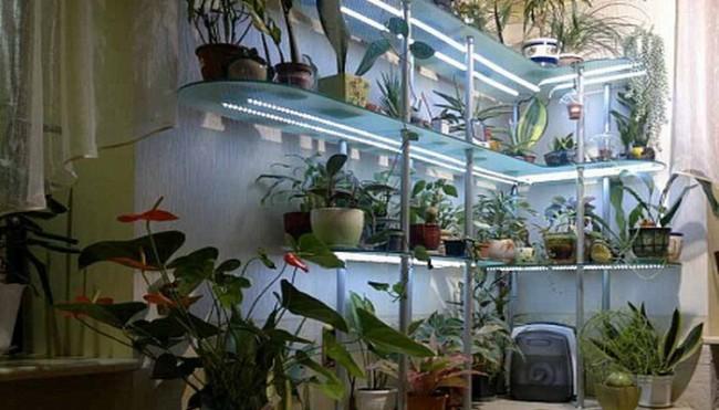 Пример светодиодного освещения растений