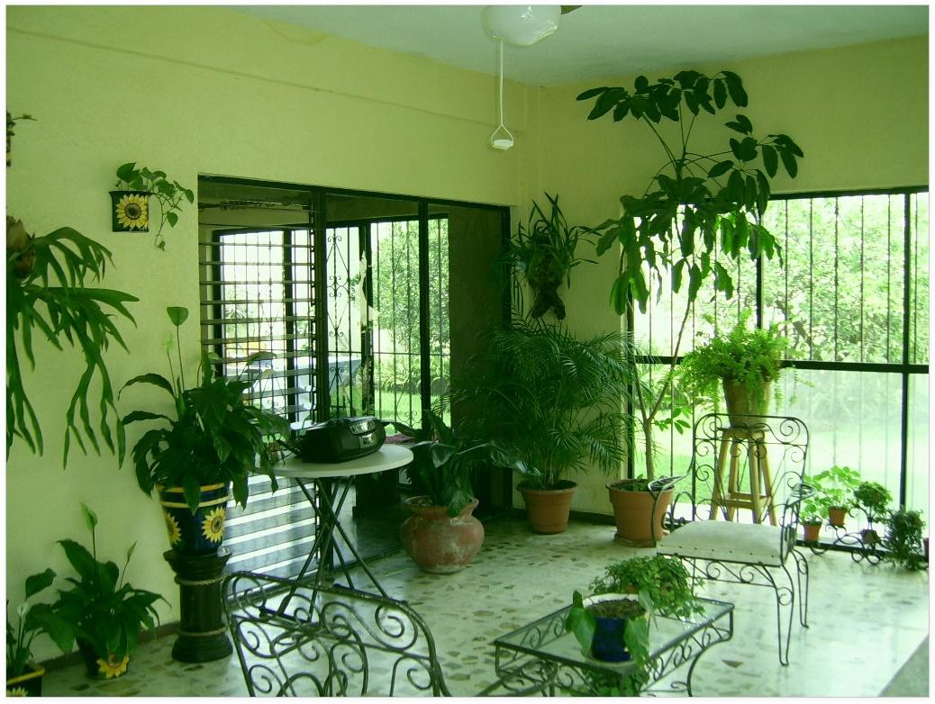 Цветы в квартире или доме фото