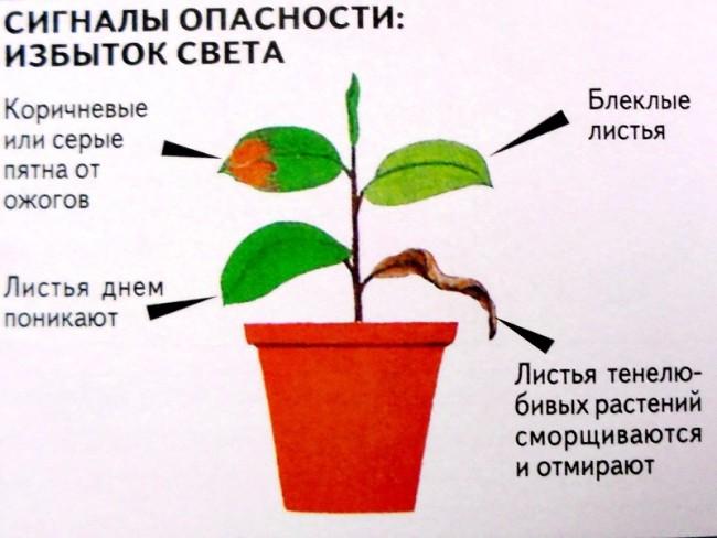 Симптомы избытка света у растений