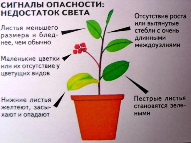 Симптомы недостатка света у растений