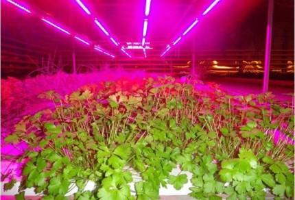 Вариант подсветки растений