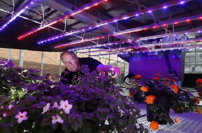 Подсветка растений в помещении светодиодными лентами