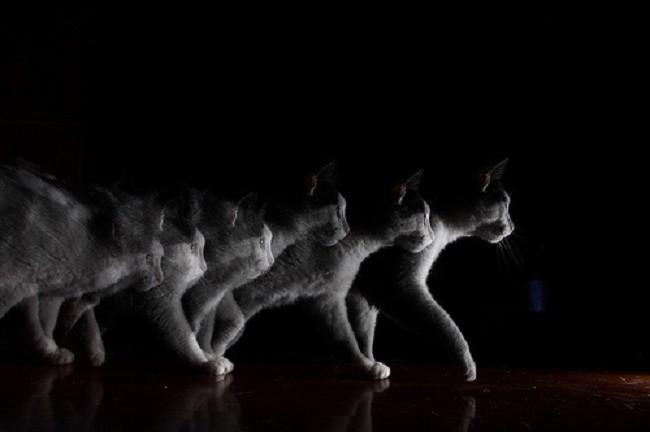 Стробоскопический эффект на примере кошки