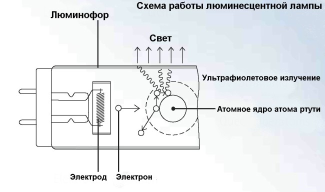 Внутреннее устройство люминесцентной лампочки