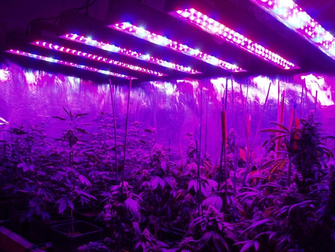 Фитолампа для марихуаны семена конопляные прикормка