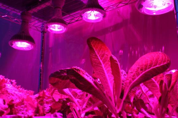 Ульрафиолетовые лампы