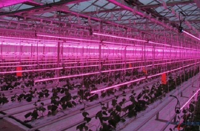 Теплица со светодиодной подсветкой растений