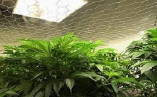 Применение ламп для подсветки растений